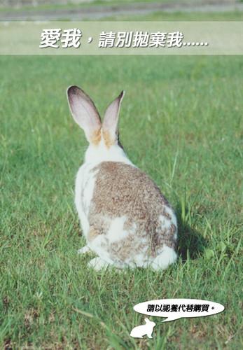 兔年。兔手冊(封面)