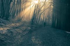 Divine Guidance (Marko Zoranovic) Tags: morning trees sun mist man forest woods path walk slovenia rays beams nikond90 nikkor1024