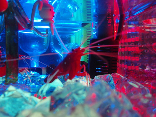 festive shrimp
