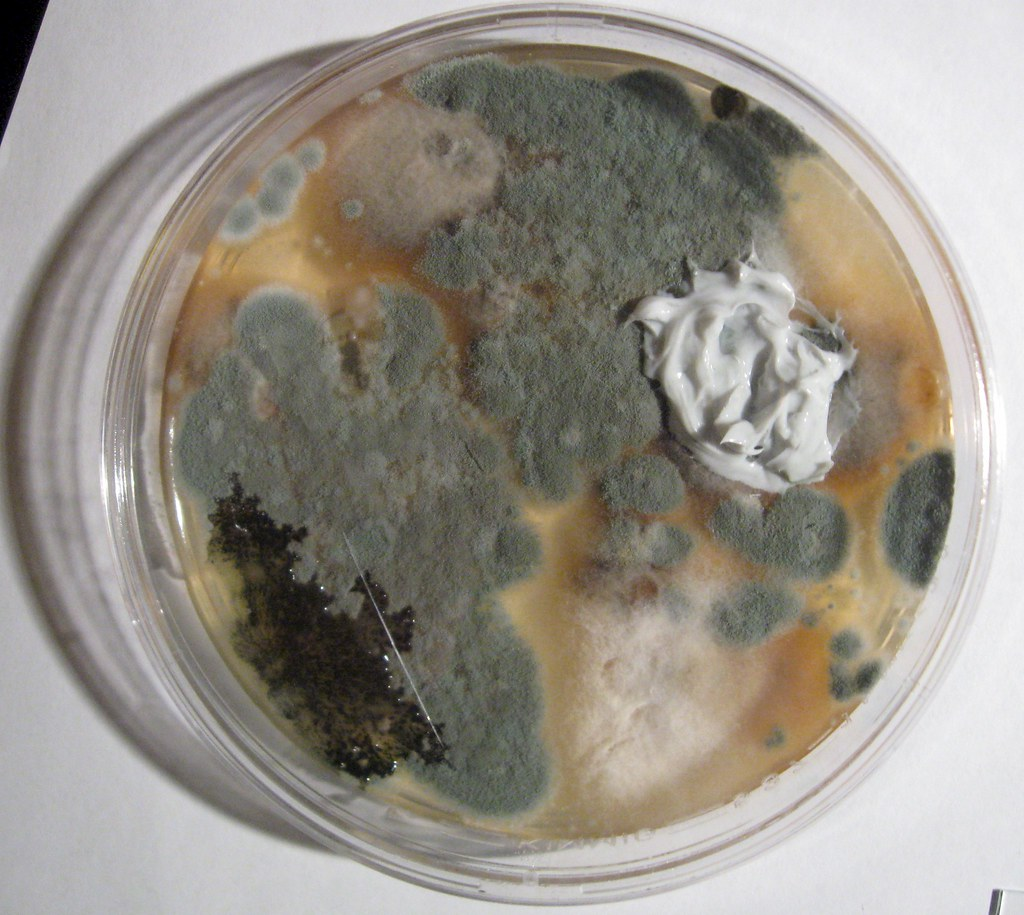 soil microbe lab Investigating the effect of microbial communities on the performance of advanced university of rhode island ri 96 pages laboratory of soil ecology and.