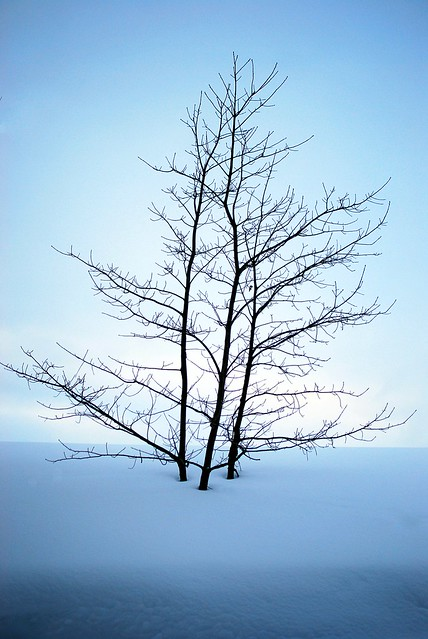 Minimalist trees in a snow bank.