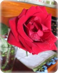 Ahh Meu Amor ... (Joana Joaninha) Tags: love amor carinho rosa felicidade vermelho dangelos joanajoaninha hellennilce