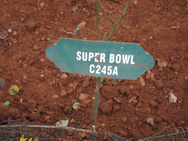 Rose Garden: Super Bowl