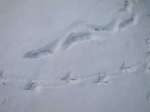 heron tracks next to Peter's footprints