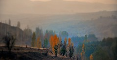 نمايي از رودخانه طرقبه (طرقبهtorghabeh) Tags: از طرقبه رودخانه نمايي