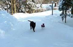 snow - dogs - deer