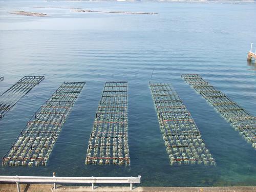 広島 牡蠣 画像7