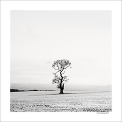 Lone Oak Tree Study 3 (Mike. Spriggs) Tags: tree oak lone oaktree staffordshire rugeley