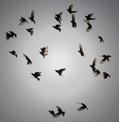 Circle of (f)light (jmanj) Tags: india patterns flight baroda vadodara birdphotography rosypastors johannesmanjrekar