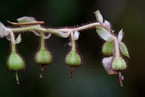 Fuzzy Berries