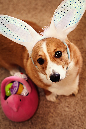 It's the Easter Corgi, Charlie Brown! by Make Way For Cupcakes