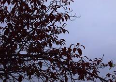 Balcony garden 20141031 (caligula1995) Tags: 2016 plumtree rain