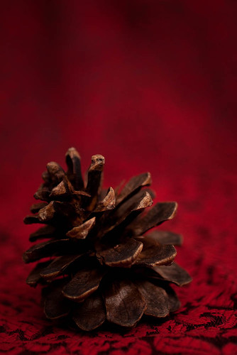 Pinecone on Red