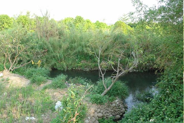 2009.3.17下午檔案照片現場,但目前河道對岸的刺竹、原生雜草林已被剷平