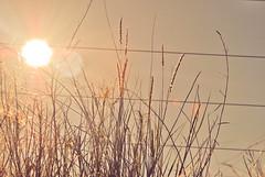 El color del sol se apodera. (Franco Rostan   Fotografa) Tags: street new november light sunset summer naturaleza sun color macro tree art textura luz sol nature argentina colors photography photo spring google nikon day tour natural photos earth top live flor paisaje colores noviembre explore amarillo cielo desenfoque reflejo rbol contraste campo 365 fotografia geo da mundo placer fotgrafo franco 2010 lapampa crepsculo nov28 fotografa cmara ramas alambre d60 encuadre enfoque nitidez explored nitido rostan i365 ntido francorostan geoticacion