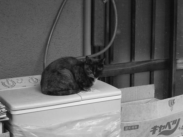 Today's Cat@2010-11-30