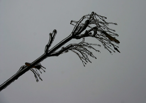 iarna-grafica