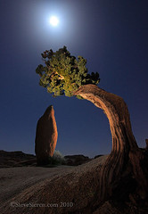 Joshua Tree Leaning Juniper & Balanced Rock (Steve Sieren Photography) Tags: california light moon night painting nationalpark joshuatree guide photoworkshop balancedrock junipertree scenicphotoworkshopscom stevesierencom