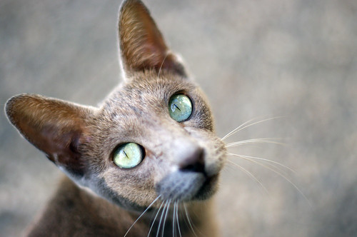 voyage cats animal club cat turkey 50mm pentax 14 kitty manualfocus kx sorgun