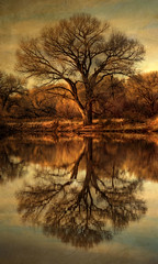 As Above So Below (Eric Vondy) Tags: arizona lake reflection tree texture water cochisecounty kingfisherpond singleexposurehdr sanpedroriparianpreserve
