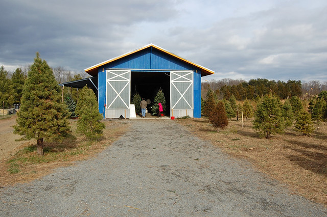 Ticonderoga Christmas Tree Farm