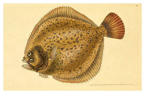 008-The natural history of British fishes 1802-Edward Donovan