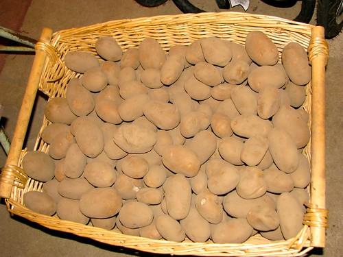 20101202potatoes1