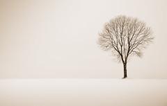 Minimalistic Winter (Lbbse) Tags: schnee winter bw snow tree sepia nikon feld monochrom minimalistic baum acre acker d90 minimalistisch