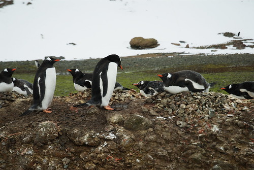 South Georgia and the South Sandwich Islands flickr photo