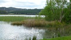 An Lake Wallace - Habitat des Eastern Banjo Frog, NGID736276596 (naturgucker.de) Tags: australien lakewallace naturguckerde cchristopherengelhardt ngid736276596