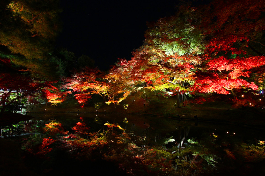 Kodaiji Red Leaf Lightup 2010 (1)