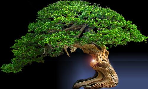 """Bonsai045 • <a style=""""font-size:0.8em;"""" href=""""http://www.flickr.com/photos/30735181@N00/5261944552/"""" target=""""_blank"""">View on Flickr</a>"""