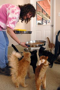 Woman feeding her cats