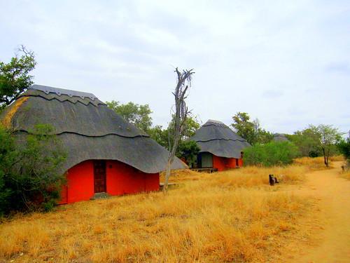 South Africa. Safari