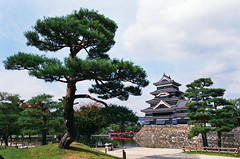 87610004 Matsumoto-Jo in the light of day (Mikey Down Under) Tags: black tree castle japan garden jo crow matsumoto prefecture nagano