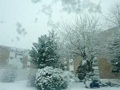 dans le cour (Julie70 Joyoflife) Tags: winter snow london photo unitedkingdom hiver lewisham londres angleterre snowing neige 2010 julie70 copyrightjkertesz havazik ninge photojuliekertesz ilneige photojulie70