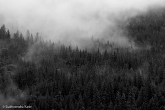 Mist and Trees, Yosemite National Park, California (Sudheendra Kadri) Tags: california trees blackandwhite mist tree nature northerncalifornia dramatic yosemite yosemitenationalpark sudhi tunnelview landscapephotography sudheendrakadri