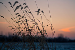 a mess of a dreamer. (jlosbon) Tags: pink blue winter sunset cold color art colors field grass sunshine canon photography rebel photo cool weed dof purple artistic fineart country backroad brilliant beanfield deadflowers grasscreek xti