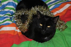 Christmas Tinsel And Blacky!! (Michelle ~ BLACKY ~ CHAMPAZ'S PHOTOS..) Tags: blackcat bed tinsel merrychristmas doona festiveseason littlefatty christmastinsel friendsofzeusandphoebe
