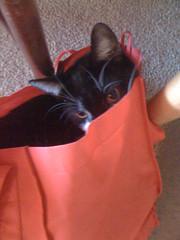 cute purchase from target (Spenser.Cat) Tags: joseph male cute cat 2010 gati gatti gato katz katzen māo 猫 s ねこネコ kat gatto purr feline meow