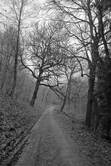 wonky trees (PogiPete) Tags: road park trees white black tree tom highway track all path uncle panasonic virgin mansion lumi footpath angled bridleway woodchester canted wonkey lx5 gloucesteshire cobbley dmclx5