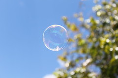 Bubble! 1/365 (sarahbrust.) Tags: sky macro tree canon photography rebel soap bokeh bubble t1i