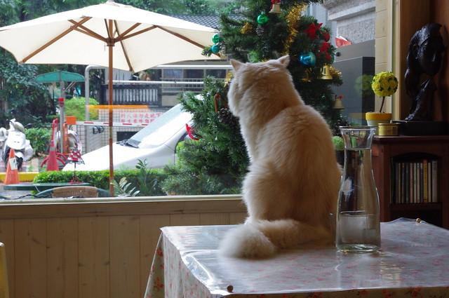 【高雄】貓與弗拉薇夫人
