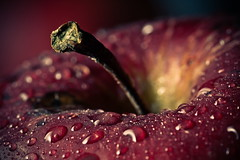 Umbilical Cord II (Eugene Pilat) Tags: red apple fruit purple umbilicalcord natureselegantshots panoramafotogrfico quotidiae theoriginalgoldseal