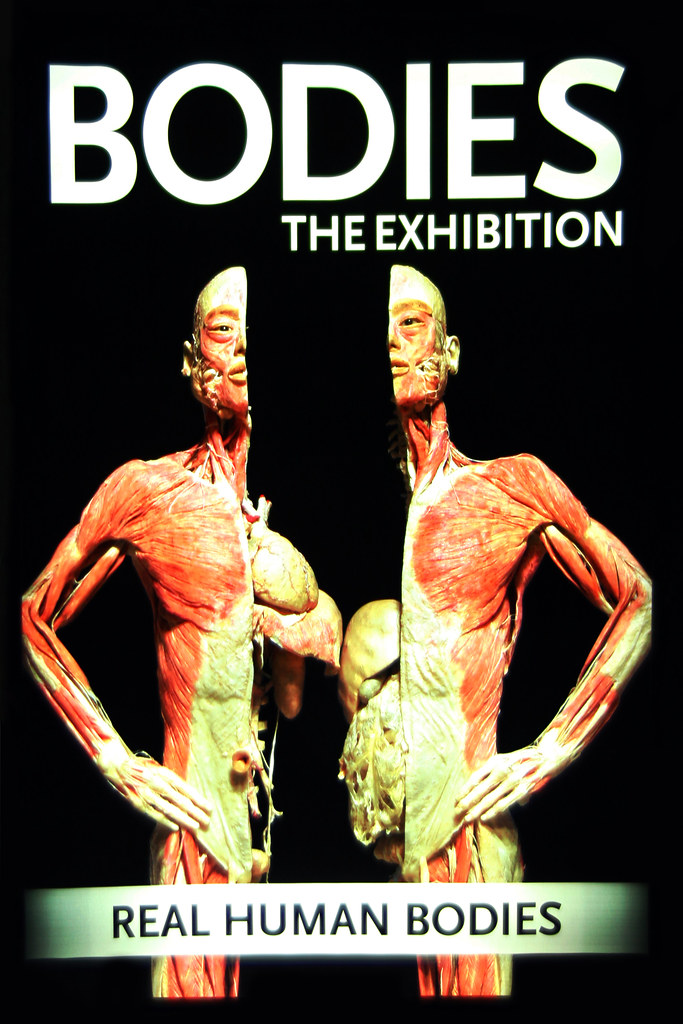 BODIES The exhibition.  Luxor Hotel and Casino in Las Vegas, Nevada
