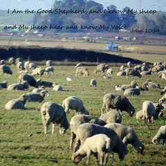 I AM The Good Shepherd....