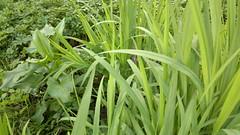 Nokia N8 grass