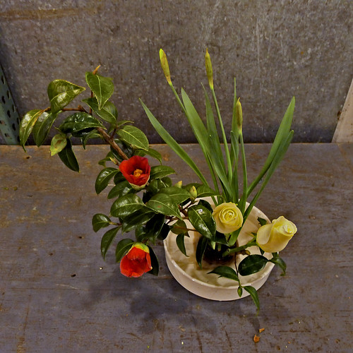 Moribana/freestyle arrangement: camellia, daffodil & rose