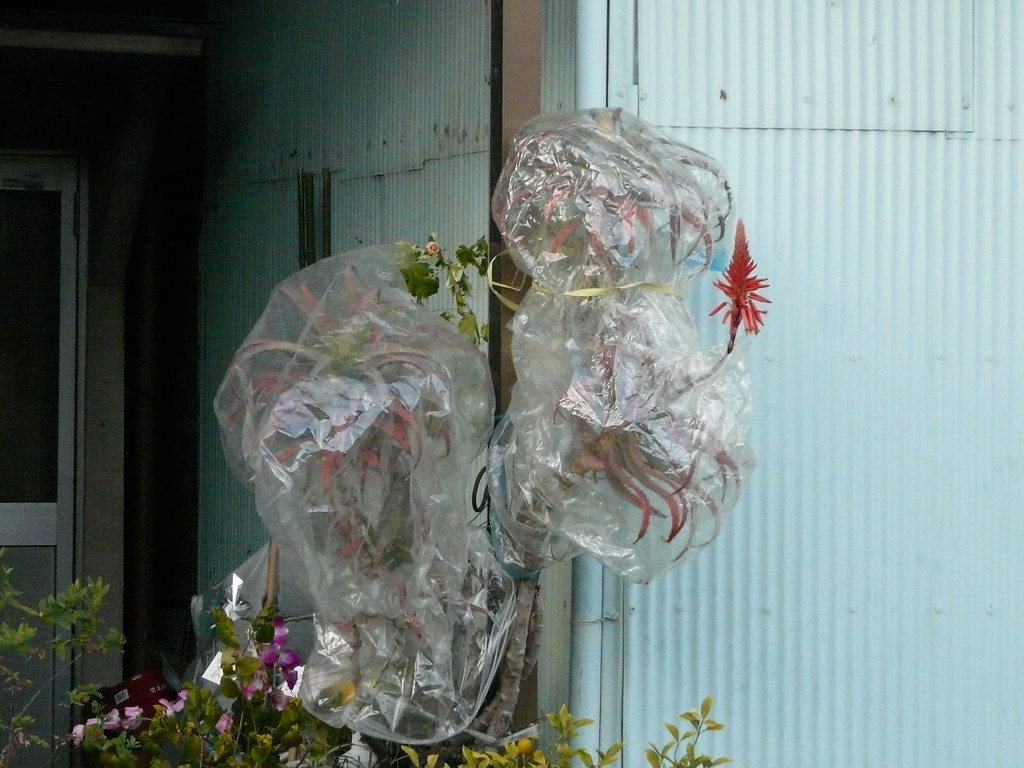 Protecting the Flowers in Plastic Bags