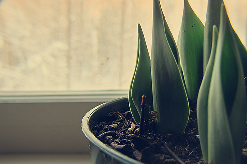 Winter day 12 - Signs of life